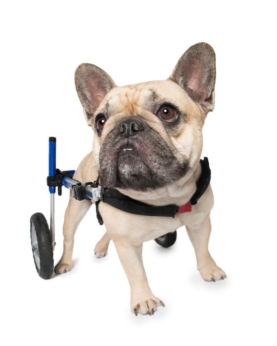 Animals With Disabilities photos 12 (1)