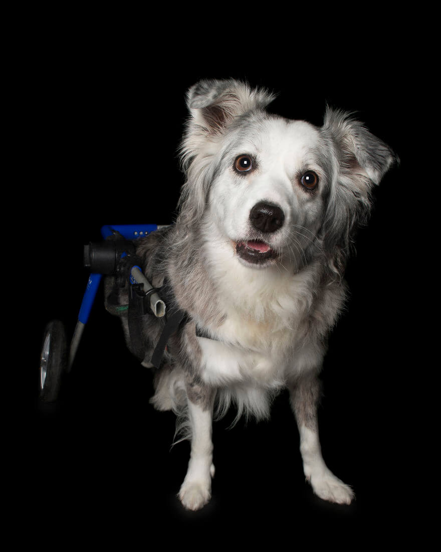 Animals With Disabilities photos 4 (1)