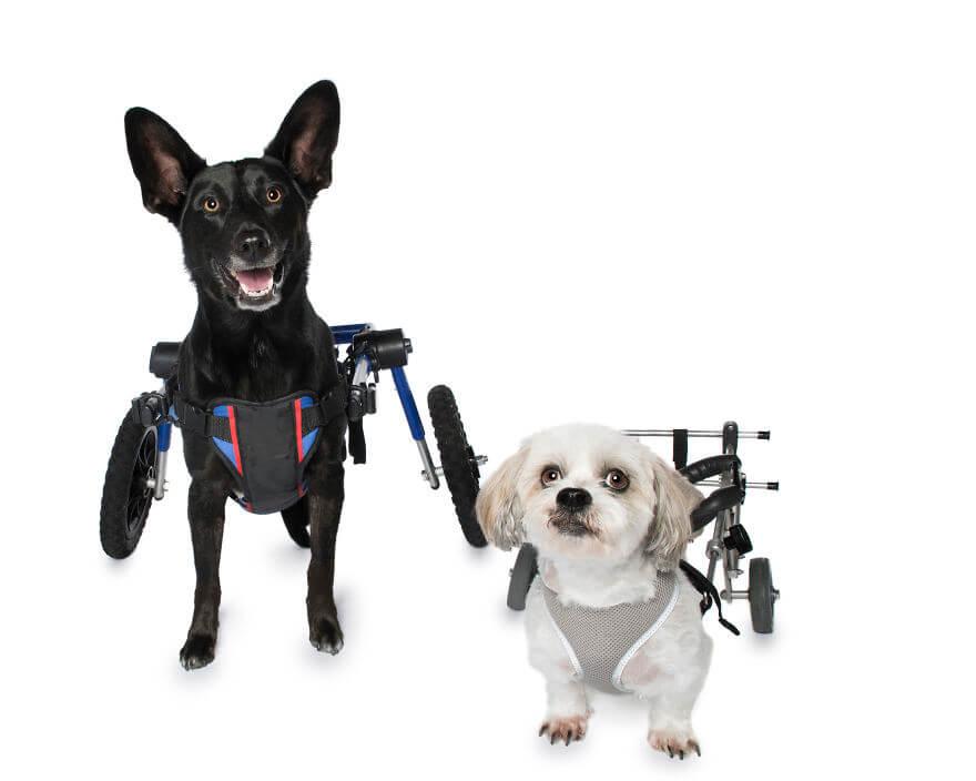 Animals With Disabilities photos 9 (1)