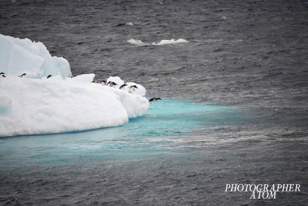 Photos of Penguins 2 (1)