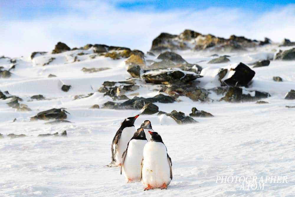 Photos of Penguins 3 (1)