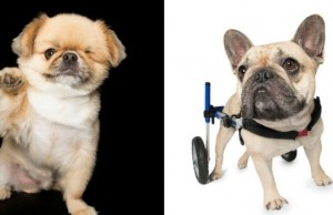 animals with disabilites feat (1)