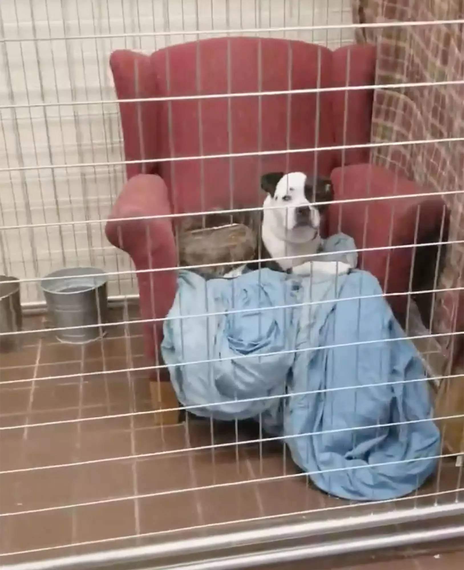 armchairs dog shelter illinois 1 (1)