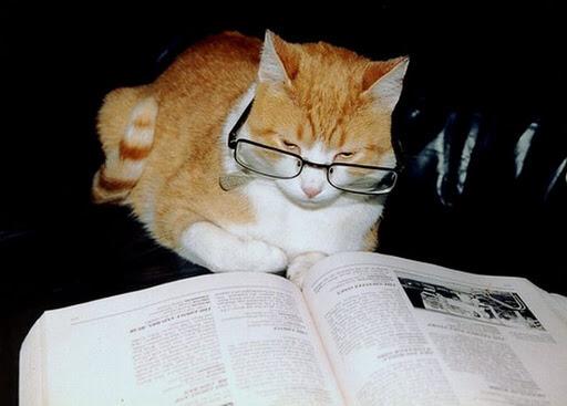 cats wearing glassess 1 (1)