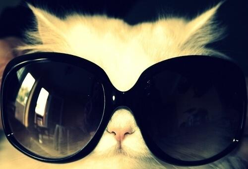 cats wearing shades 13 (1)
