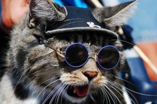 cats wearing shades 15 (1)