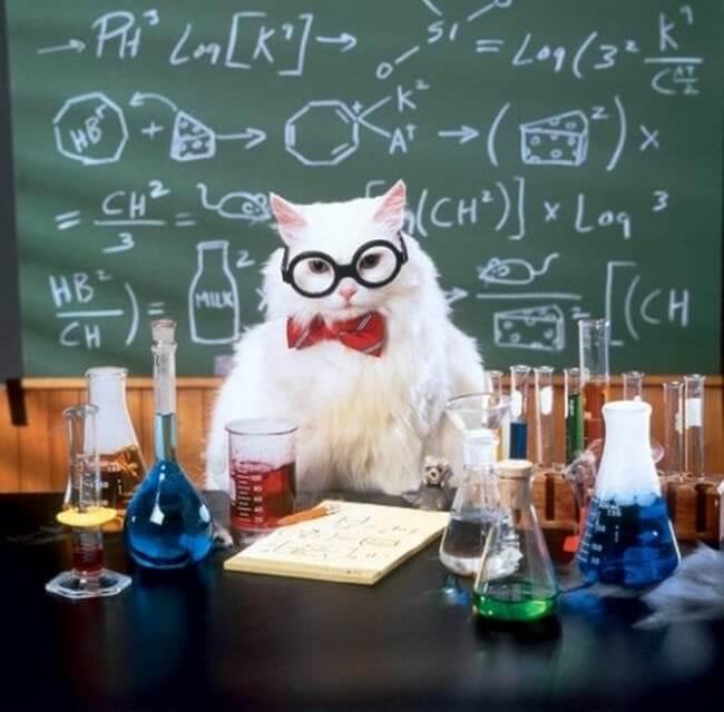 kittens wearing glassess 16 (1)
