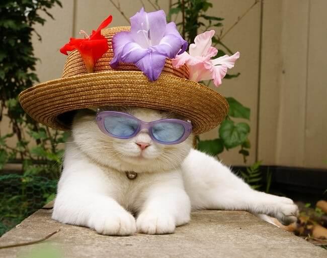 kittens wearing glassess 17 (1)