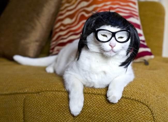 kittens wearing glassess 18 (1)