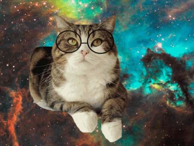 kittens wearing glassess 19 (1)