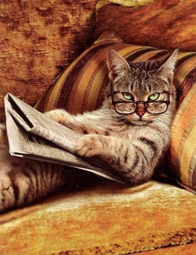 kittens wearing glassess 20 (1)