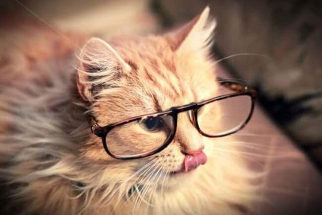 cats putting glassess 27 (1)