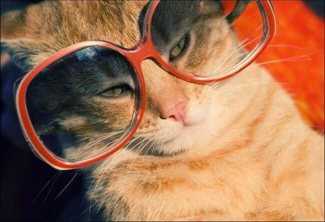 cats putting glassess 28 (1)