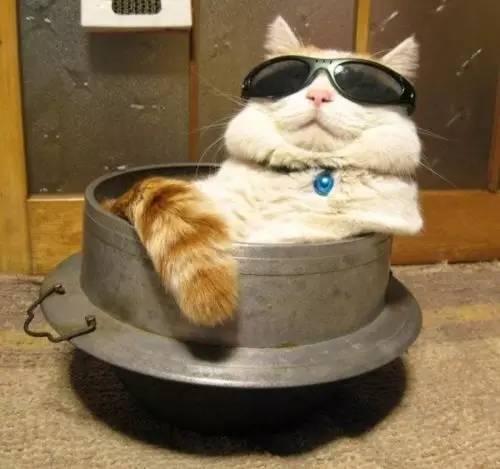 cats putting glassess 29 (1)