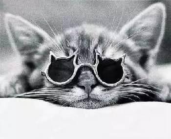 cats putting glassess 30 (1)