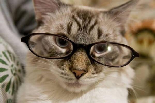 cats wearing glassess 8 (1)