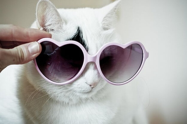 cats wearing sunglassess 9 (1)