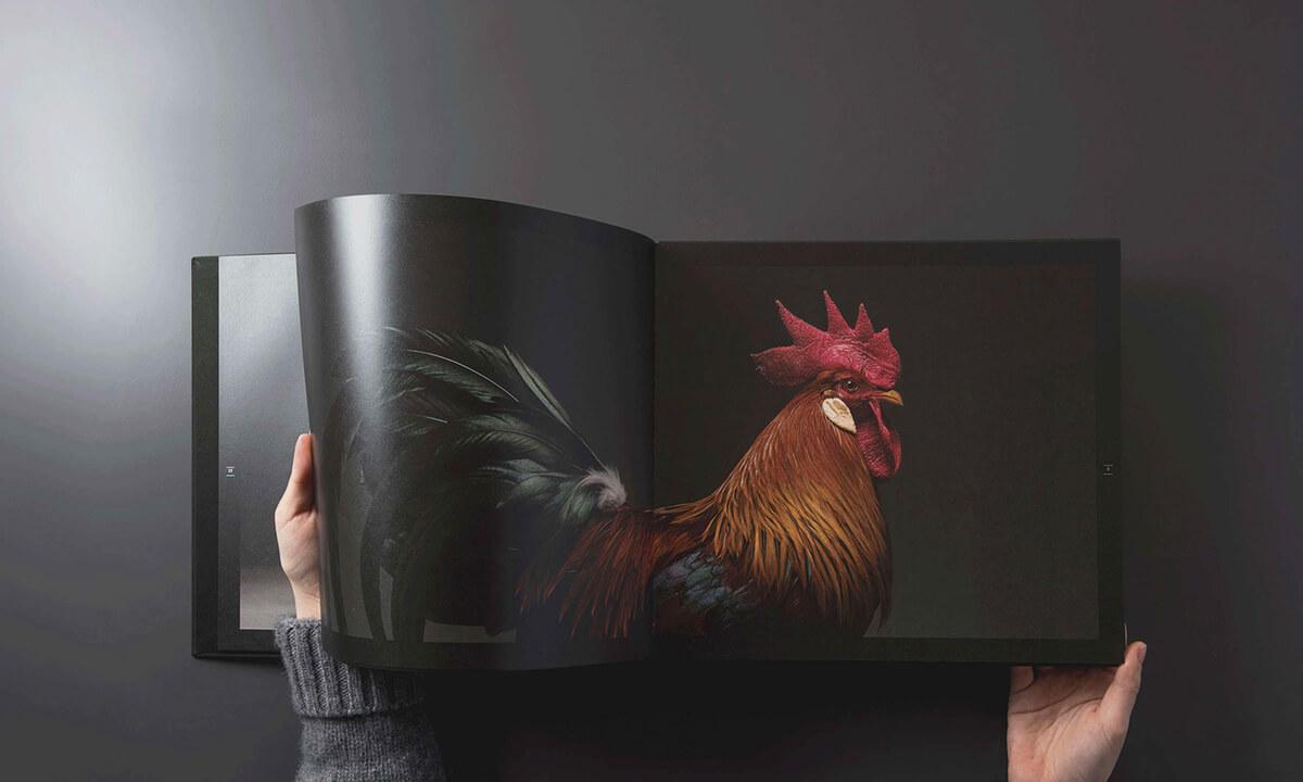 chicken portraits moreno monti matteo tranchellini 3 (1)