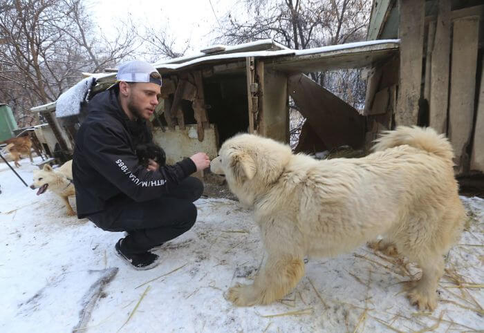 gus kenworthy rescued 90 dogs 12 (1)