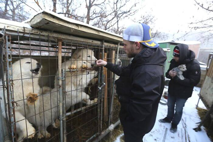 gus kenworthy rescued 90 dogs 6 (1)