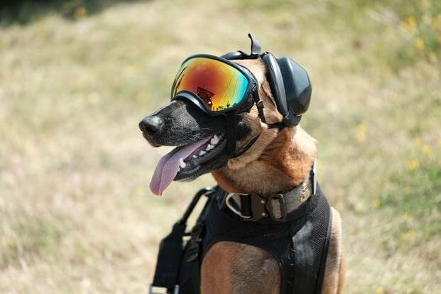 k9 military working dogs 1 (1)