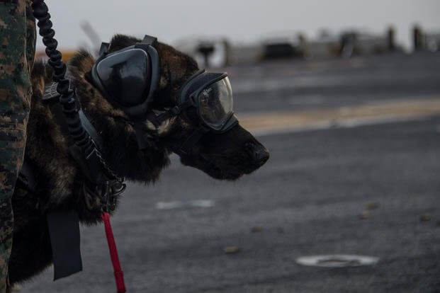 k9 military working dogs 11 (1)