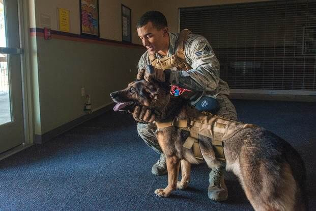 k9 military working dogs 12 (1)