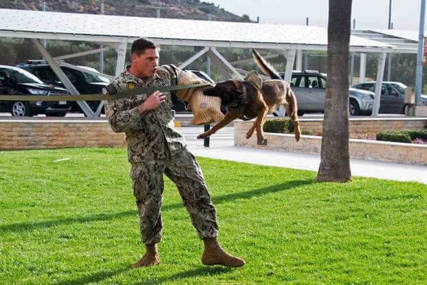 k9 military working dogs 5 (1)