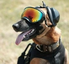 k9 military working dogs fet (1)