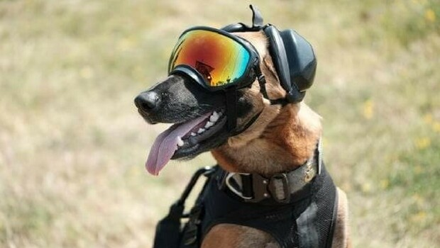 K9 Military Working Dogs Are Pure Awesome And We Have 13
