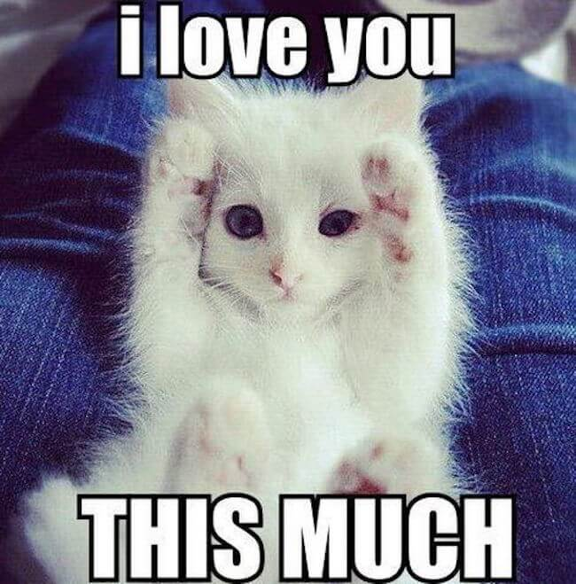 We Love Each Other Meme: 32 Love Memes That Are So Sweet You Can Literally Taste It