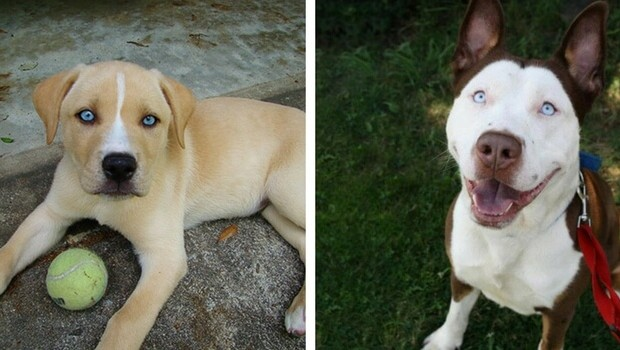 mixed breed dogs feat (1)