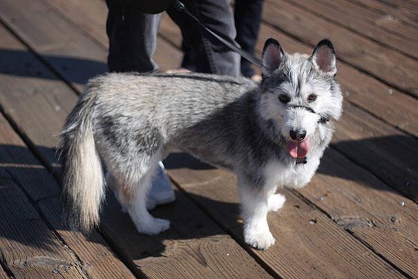 mixed dog breeds 16 (1)