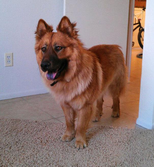 mixed dog breeds 19 (1)