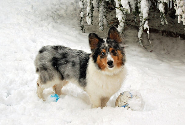 mixed dog breeds 20 (1)