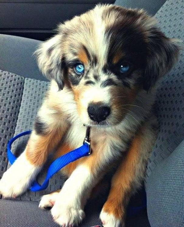 mixed dog breeds 23 (1)