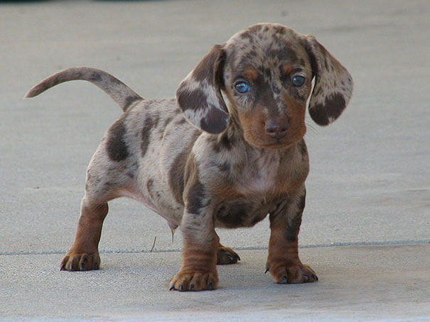 mixed dog breeds 4 (1)