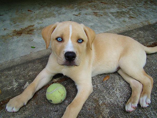 mutts dog breeds 5 (1)