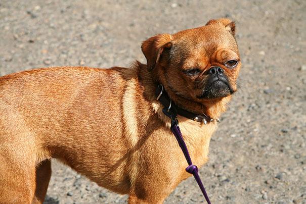 mutts dog breeds 6 (1)