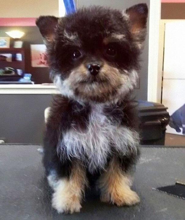 mutts dog breeds 9 (1)