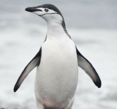 photos of penguins feat (1)
