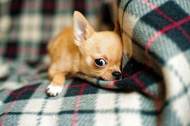 the smallest animals in the world 1 (1)