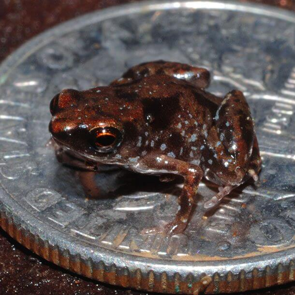 tiny animals in the world 15 (1)
