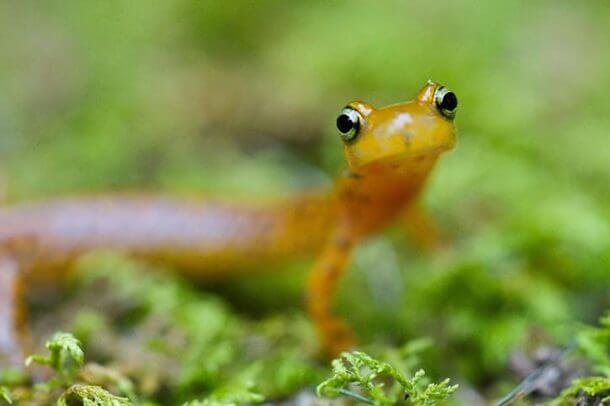 tiny animals in the world 17 (1)