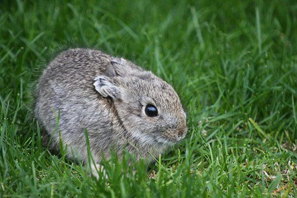 the smallest animals in the world 2 (1)