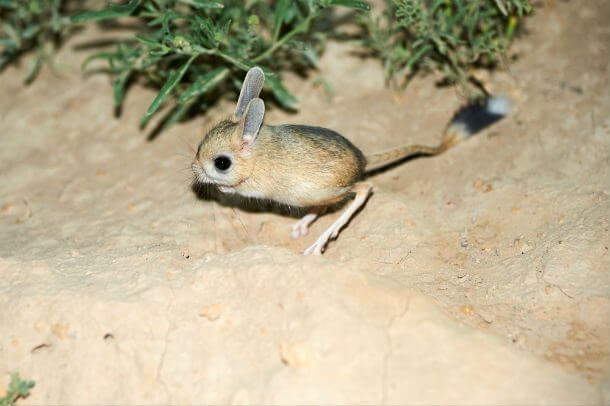 the smallest animals in the world 25 (1)