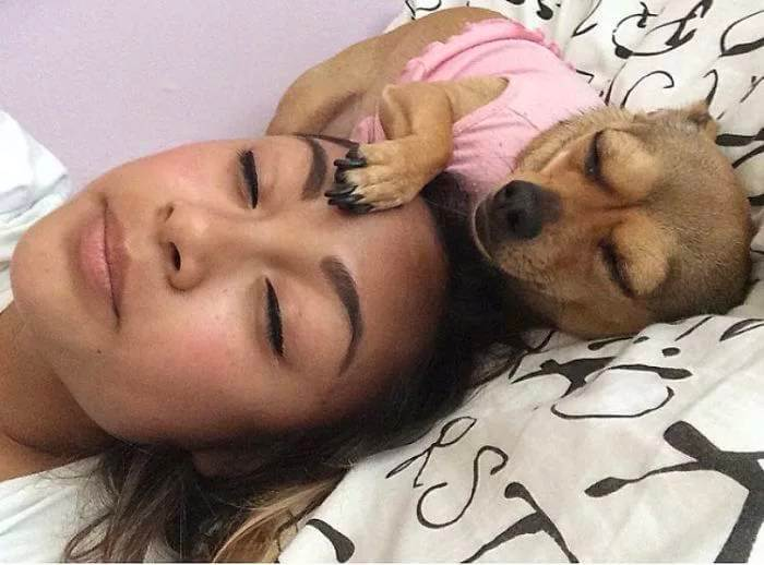 twinning trend pets 4 (1)