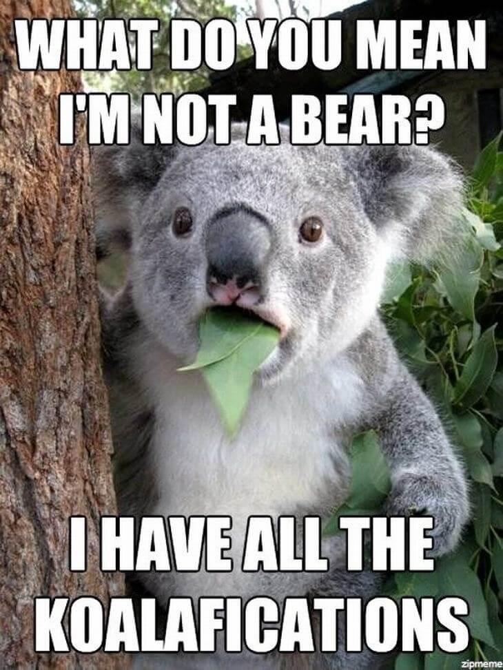 animal puns 1 (1)