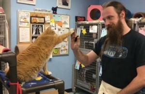 cat high five program feat (1)