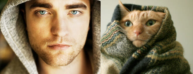 cats better than male models 17 (1)